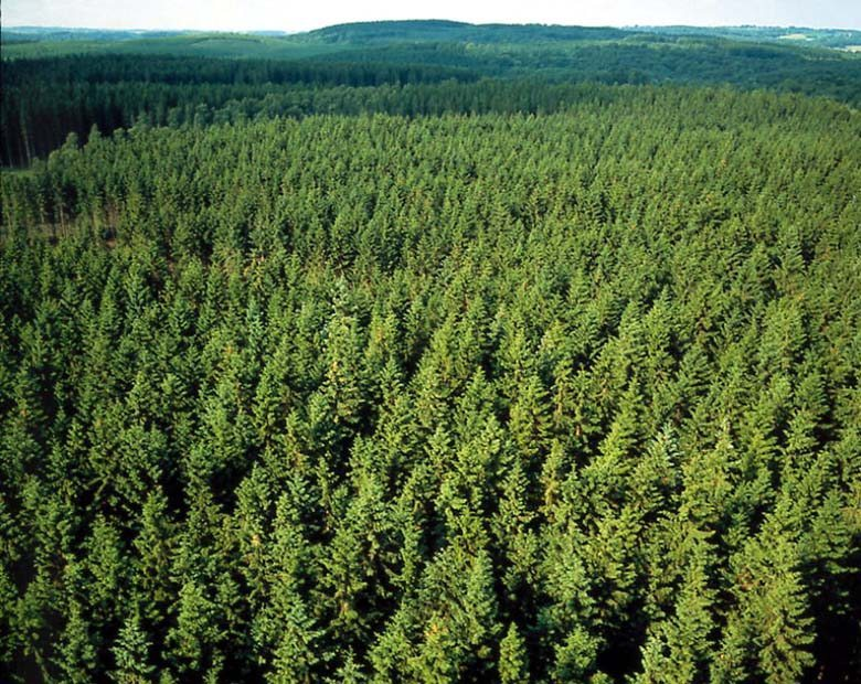forestry in Roscommon